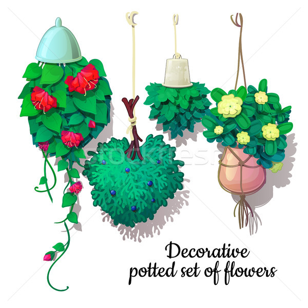 Set of potted flowers growing down. Vector illustration. Stock photo © Lady-Luck