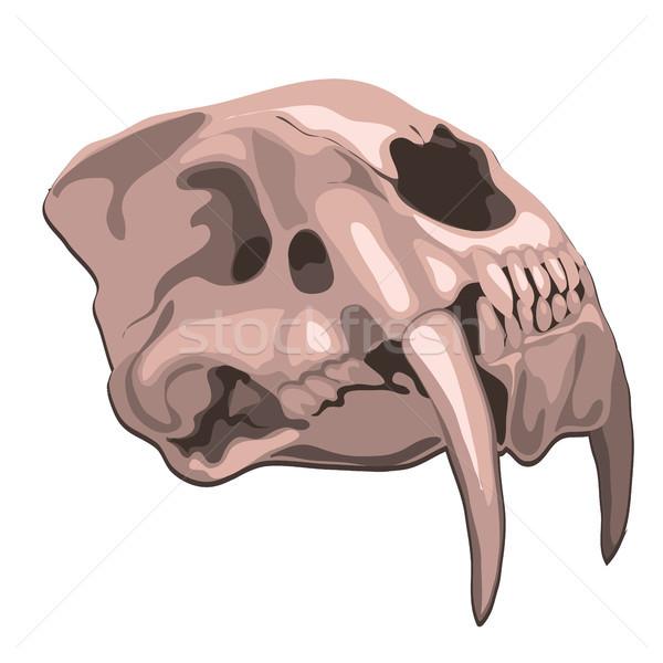 череп тигр изолированный белый вектора Cartoon Сток-фото © Lady-Luck