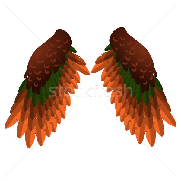 Two bird wings isolated on white background. Vector cartoon close-up illustration. Stock photo © Lady-Luck
