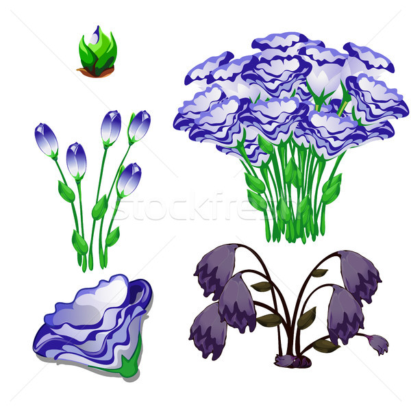 The life stages of flowers eustoma purple isolated on white background. Vector cartoon close-up illu Stock photo © Lady-Luck