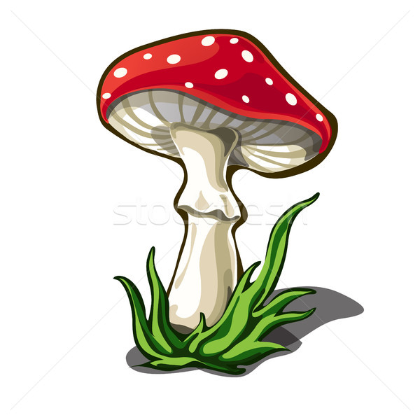 Beautiful fly agaric isolated on white background. Poisonous mushrooms. Vector cartoon close-up illu Stock photo © Lady-Luck