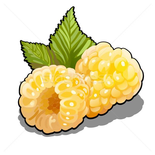 Baies jaune framboises fruits vert Photo stock © Lady-Luck