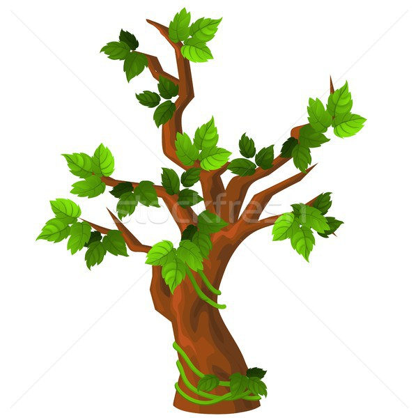 A deciduous tree with green leaves isolated on white background. Vector cartoon close-up illustratio Stock photo © Lady-Luck