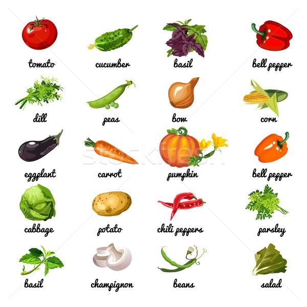 Bonitinho cartaz tópico dieta saudável legumes ervas Foto stock © Lady-Luck