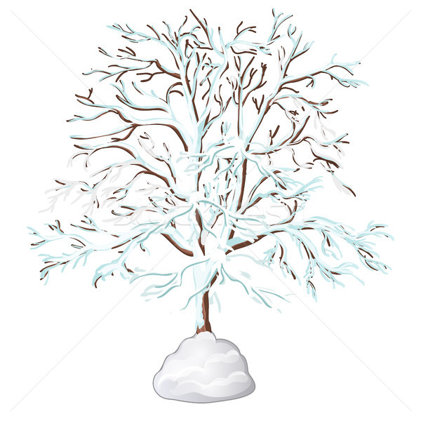 The leafless tree covered with snow isolated on white background. Vector illustration. Stock photo © Lady-Luck