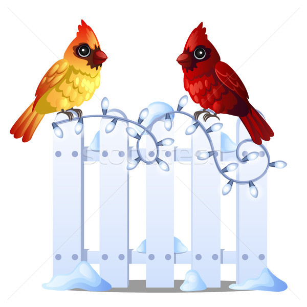 Two cute Northern Cardinal birds sit on a snowy wooden fence isolated on white background. Sample of Stock photo © Lady-Luck