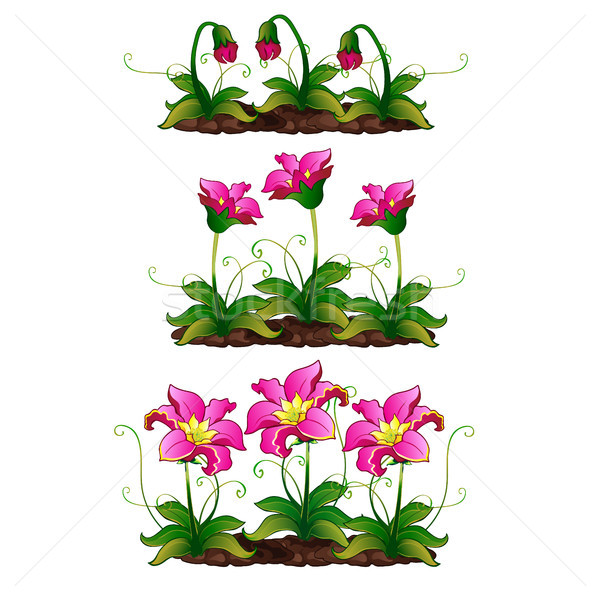 The growth stage fancy pink flower. Vector illustration. Stock photo © Lady-Luck