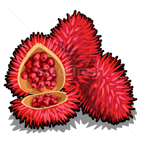 Set of whole and half of ripe Annatto tree fruit or Bixa orellana. Element of a popular seasoning fo Stock photo © Lady-Luck