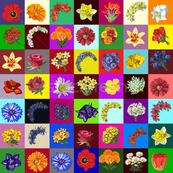 Groot groep ingesteld bloemen tuin weide Stockfoto © Lady-Luck
