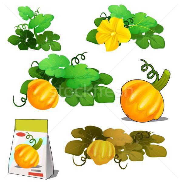 Szett élet mezőgazdasági növény narancs bokor Stock fotó © Lady-Luck