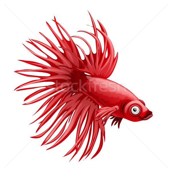 Cartoon red betta fish, siamese fighting fish, betta splendens crown tail isolated on white backgrou Stock photo © Lady-Luck