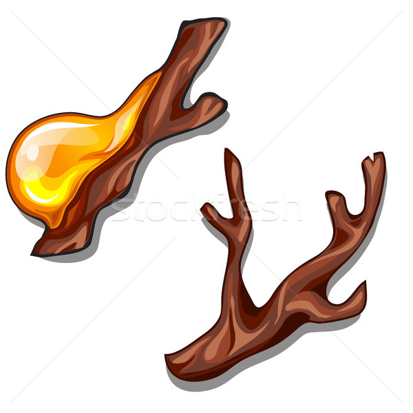 A branch dripping with resin isolated on a white background. Vector illustration. Stock photo © Lady-Luck