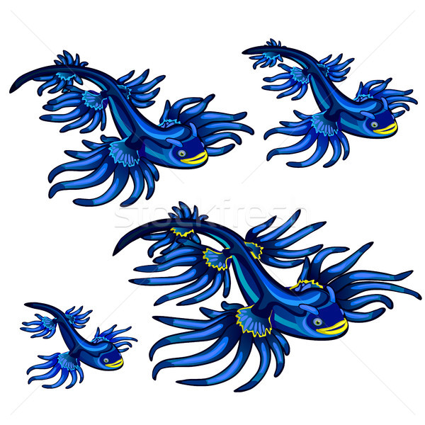 Gastropod mollusk Glaucus atlanticus, the Blue dragon isolated on white background. Vector cartoon c Stock photo © Lady-Luck
