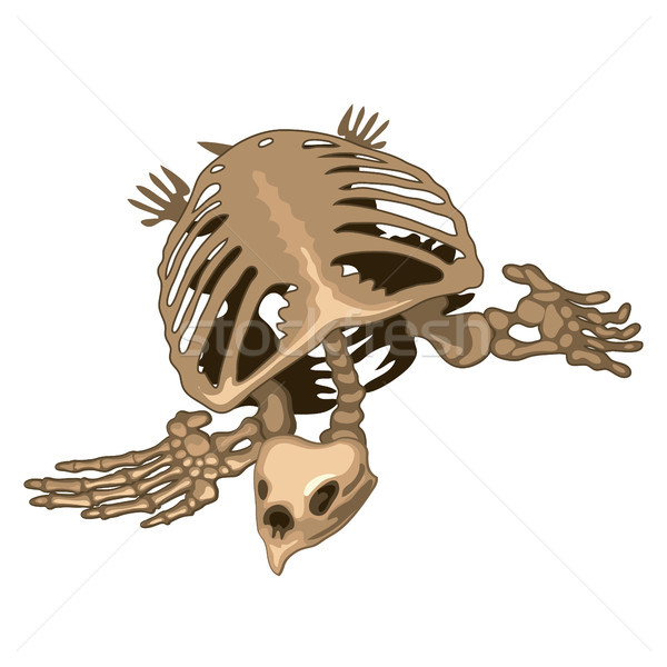 The skeleton of a prehistoric turtle isolated on white background. Vector illustration. Stock photo © Lady-Luck