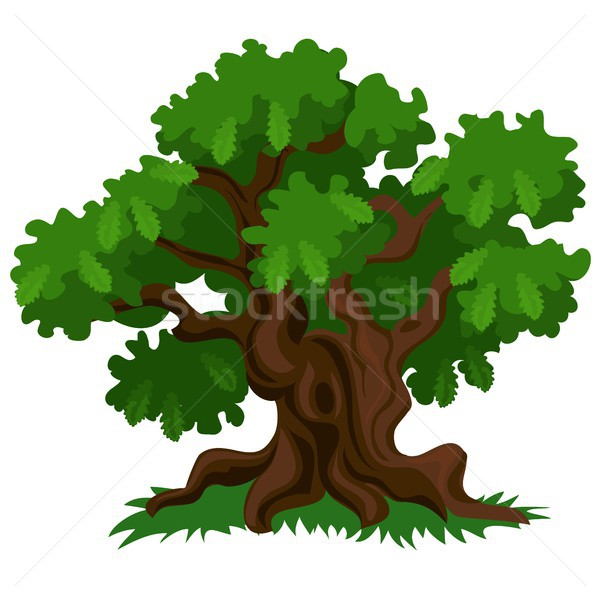 A deciduous oak tree with green leaves and fresh grass isolated on white background. Vector cartoon  Stock photo © Lady-Luck