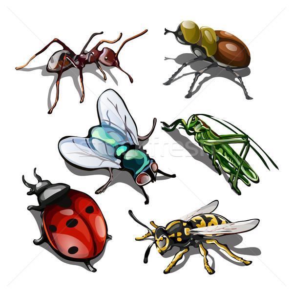 Ingesteld insecten geïsoleerd witte natuur achtergrond Stockfoto © Lady-Luck
