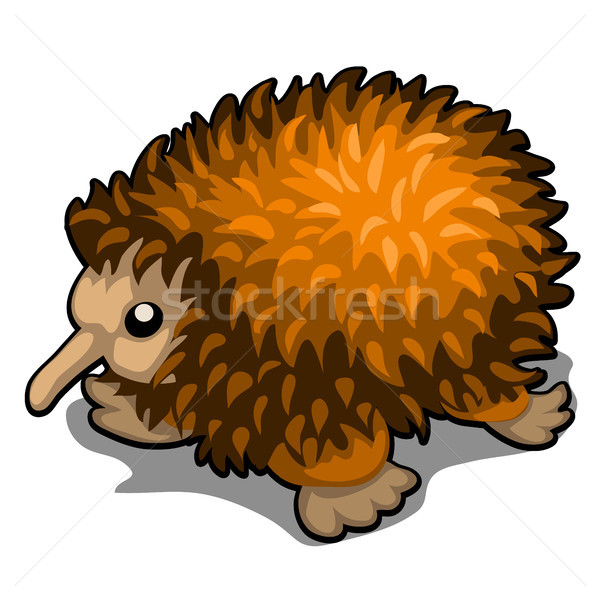 Cartoon echidna isolated on white background. Vector illustration. Stock photo © Lady-Luck