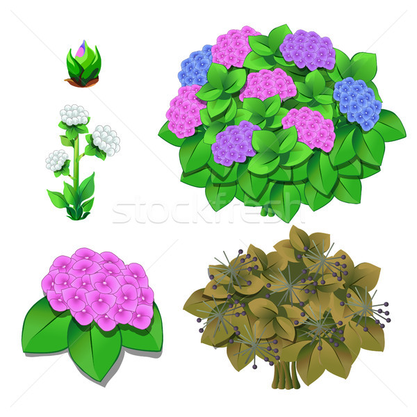 Life stages of flowers isolated on white background. Vector cartoon close-up illustration. Stock photo © Lady-Luck