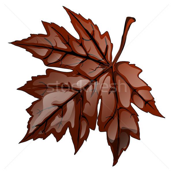 Brun automne feuille d'érable isolé blanche vecteur Photo stock © Lady-Luck
