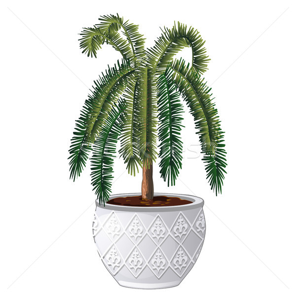 Office palm tree isolated on white background. Vector cartoon close-up illustration. Stock photo © Lady-Luck