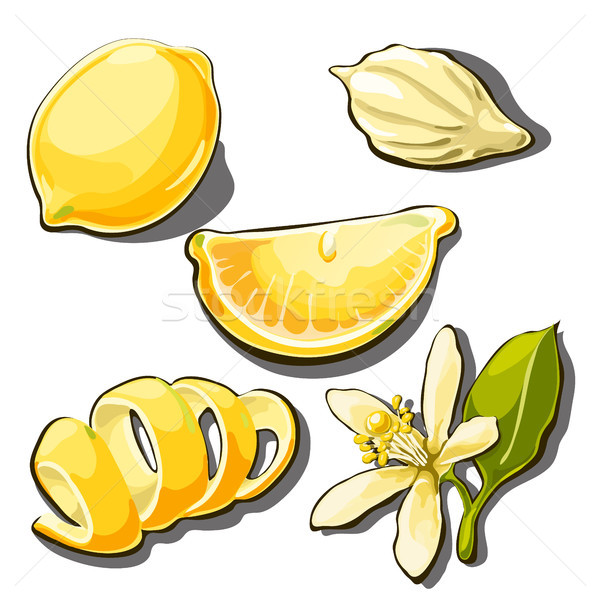 Whole ripe yellow lemon. Peel, slice, seed and flower of lemon isolated on a white background. Vecto Stock photo © Lady-Luck