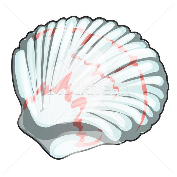 Shell aislado blanco mariscos vector Cartoon Foto stock © Lady-Luck