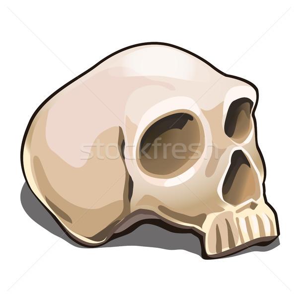 Menselijke schedel geïsoleerd witte monster poster Stockfoto © Lady-Luck