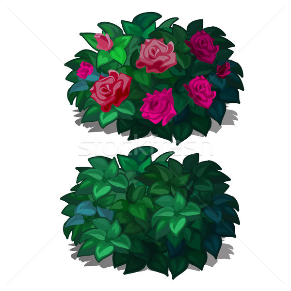 Set compact rounded shrubs with flowers roses isolated on white background. Flowering plants for fur Stock photo © Lady-Luck