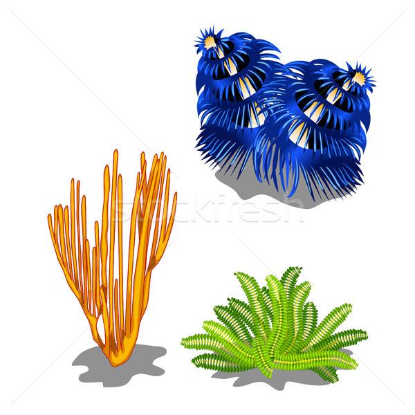Ingesteld kleurrijk mariene geïsoleerd witte vector Stockfoto © Lady-Luck