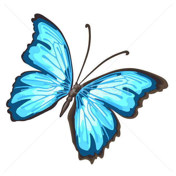 Cartoon butterfly with blue wings isolated on white background. Cartoon vector close-up illustration Stock photo © Lady-Luck
