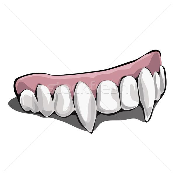 Сток-фото: вампир · зубов · белый · искусственный · челюсть · фон