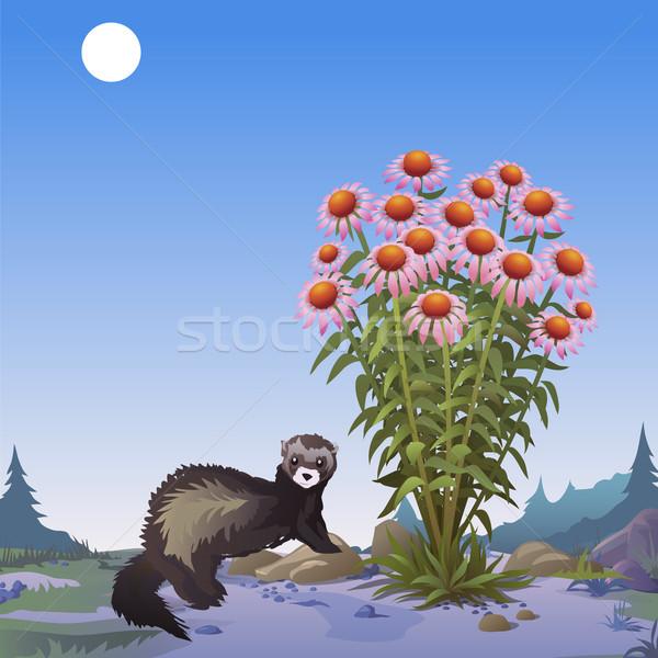 Poster fauna selvatica Bush vettore cartoon primo piano Foto d'archivio © Lady-Luck