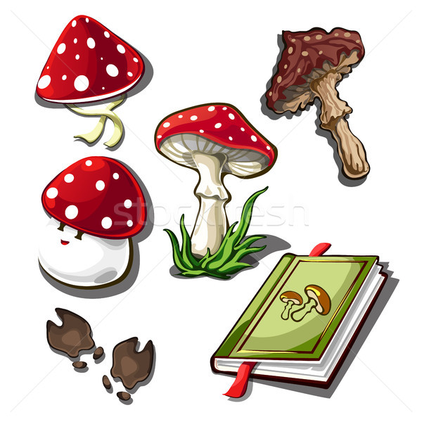 The set of objects on the subject of picking mushrooms isolated on a white background. Amanita poiso Stock photo © Lady-Luck