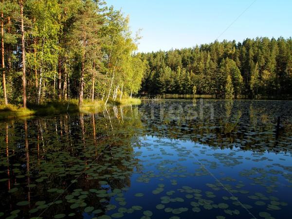 Lago Finlandia parco cielo acqua legno Foto d'archivio © Laks