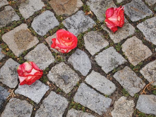 Three Roses Stock photo © Laks