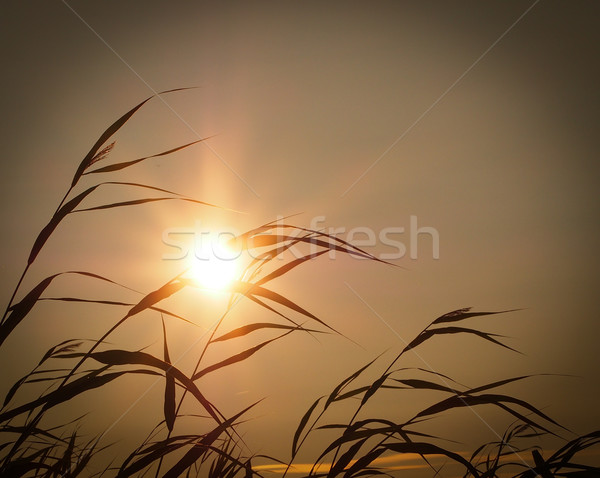 Summer evening in Finland Stock photo © Laks