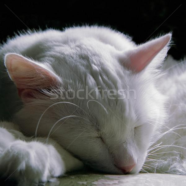 Kedi uyku kafa oynamak memeli Stok fotoğraf © lalito