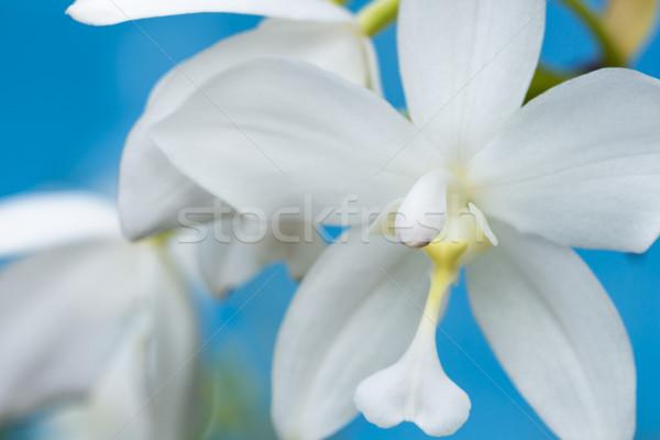 Witte orchidee macro mooie water natuur Stockfoto © LAMeeks