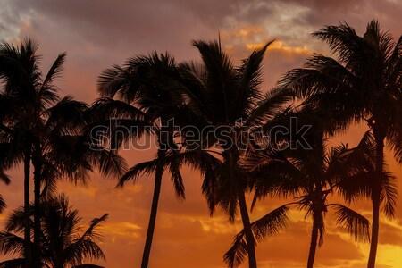 Sunset Palm Trees Stock photo © LAMeeks