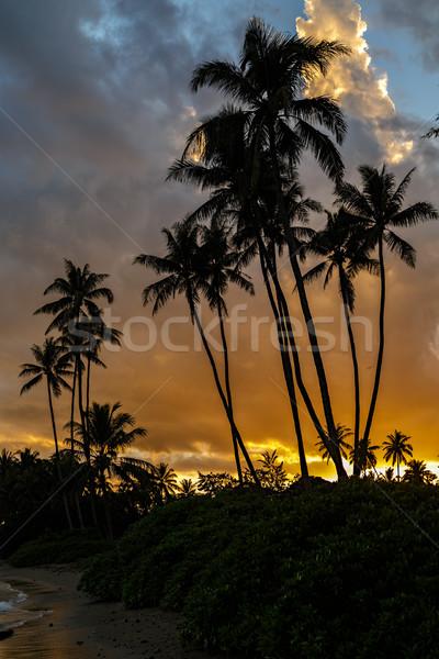 Zonsondergang kleurrijk wal strand park zuiden Stockfoto © LAMeeks