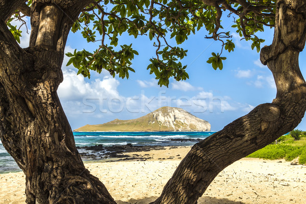 Сток-фото: кролик · острове · побережье · облака · океана