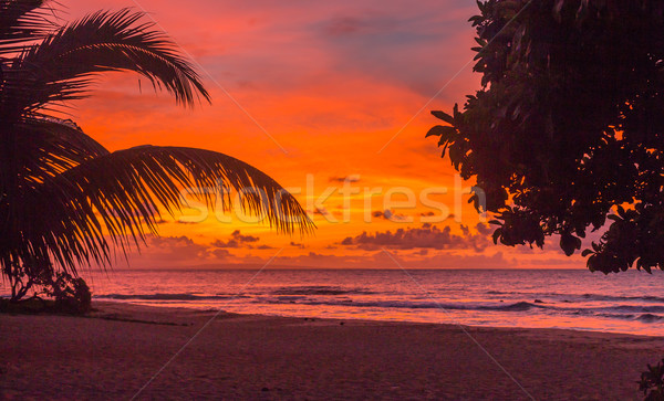 Nascer do sol colorido dois árvores praia Havaí Foto stock © LAMeeks
