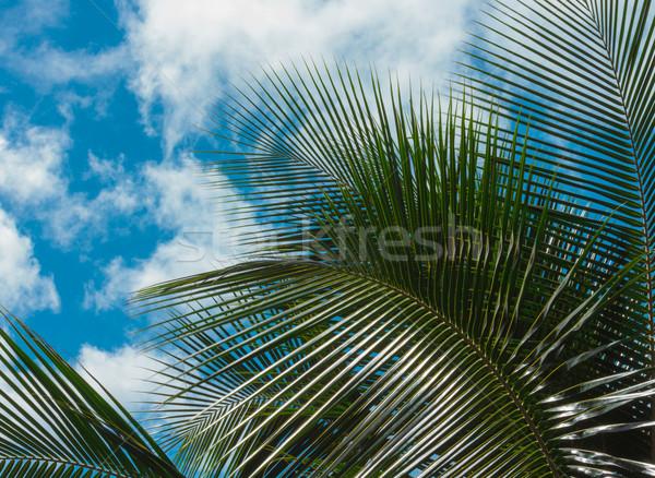 Folhas de palmeira blue sky azul nublado céu Foto stock © LAMeeks