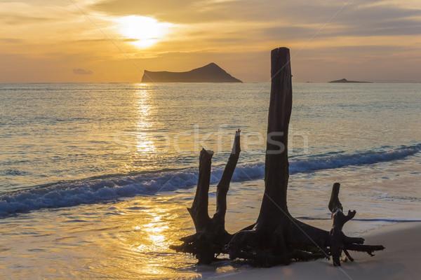Kidőlt fa napfelkelte öreg égbolt fa nap Stock fotó © LAMeeks