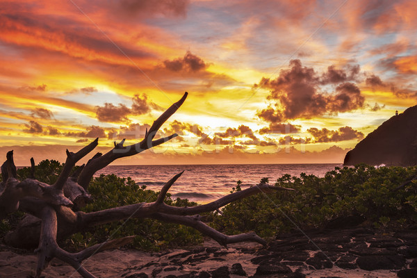 Zonsopgang mooie strand hemel wolken zonsondergang Stockfoto © LAMeeks
