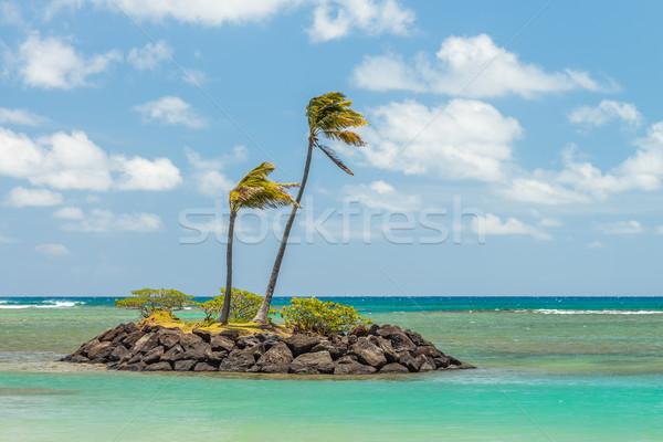 Pici kő sziget pálmafák el part Stock fotó © LAMeeks
