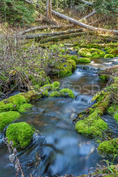 Mossy Rock Stream Stock photo © LAMeeks