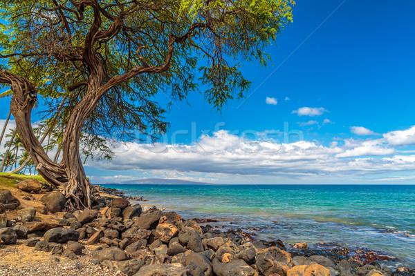 Kihei Coastline Stock photo © LAMeeks