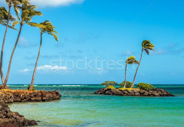 Minuscolo rock isola palme costa Foto d'archivio © LAMeeks