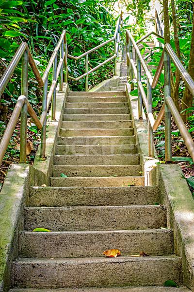 Felemelkedik dzsungel lépcsősor lépcsőfeljáró buja botanikus Stock fotó © LAMeeks